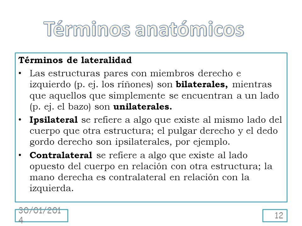 Términos anatómicos Términos de lateralidad