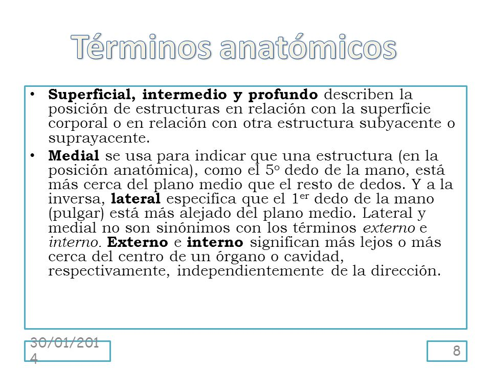 Términos anatómicos