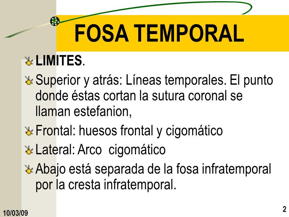 FOSA TEMPORAL LIMITES. Superior y atrás: Líneas temporales. El punto donde éstas cortan la sutura coronal se llaman estefanion,