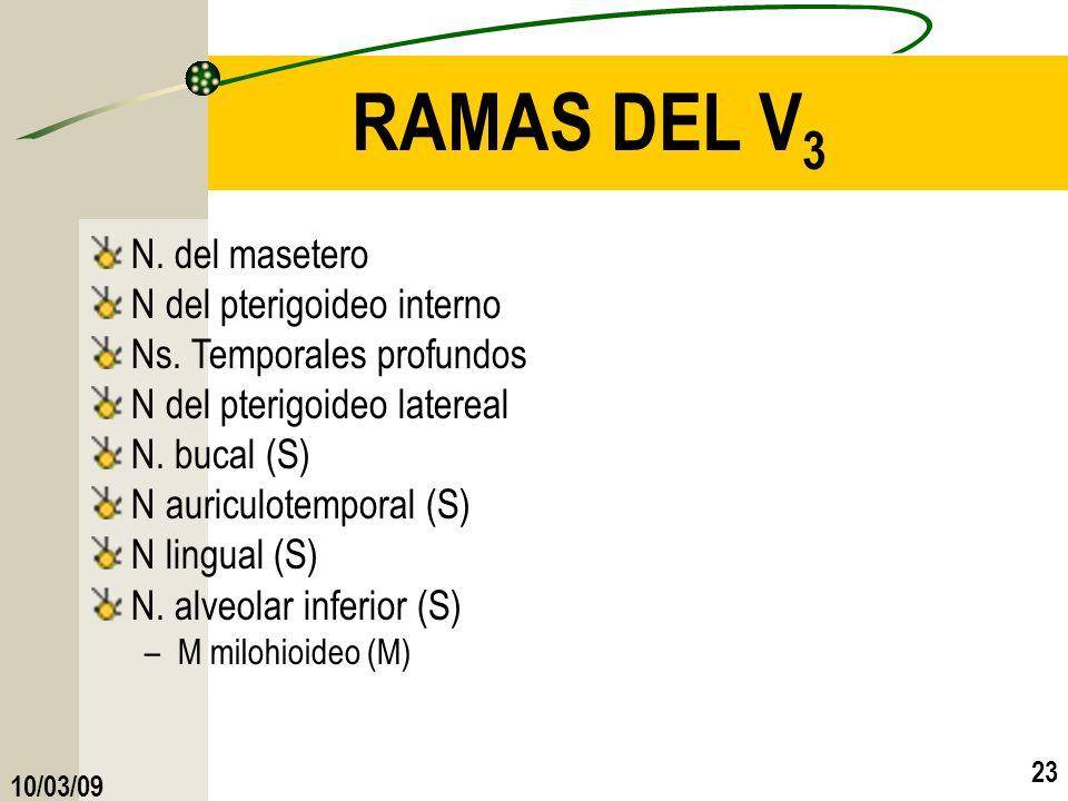 RAMAS DEL V3 N. del masetero N del pterigoideo interno