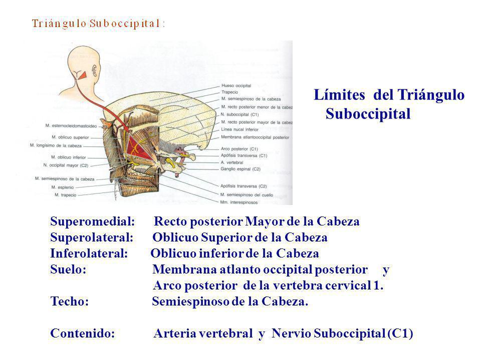 Límites del Triángulo Suboccipital