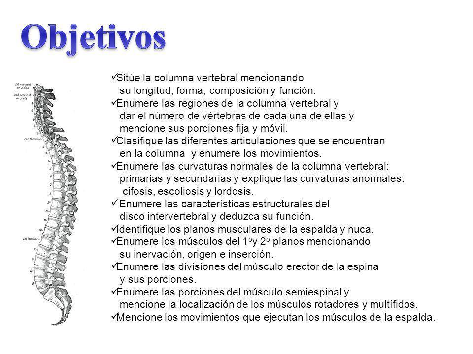 Objetivos Sitúe la columna vertebral mencionando