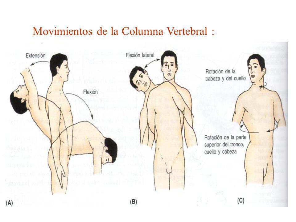 Movimientos de la Columna Vertebral :