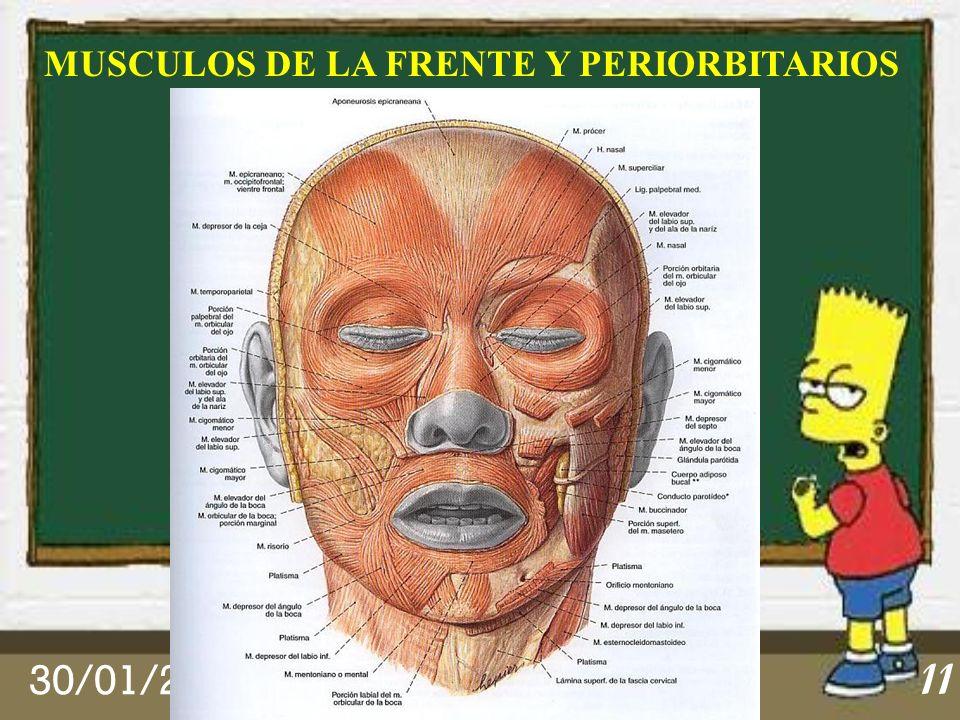 MUSCULOS DE LA FRENTE Y PERIORBITARIOS