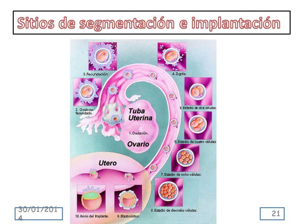 Sitios de segmentación e implantación