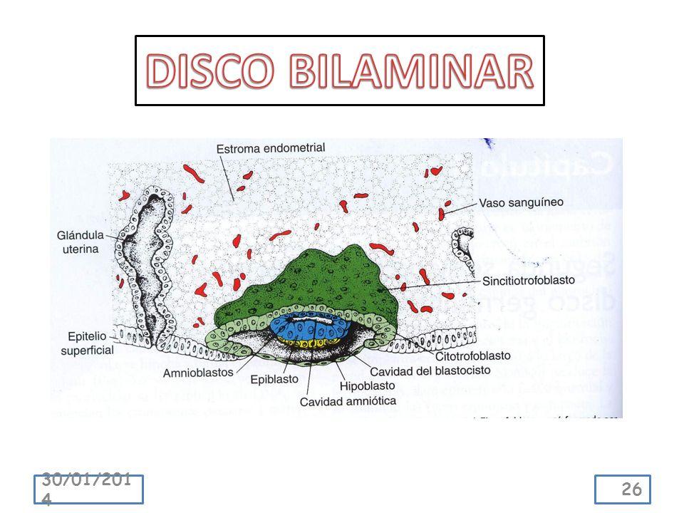 DISCO BILAMINAR 24/03/2017