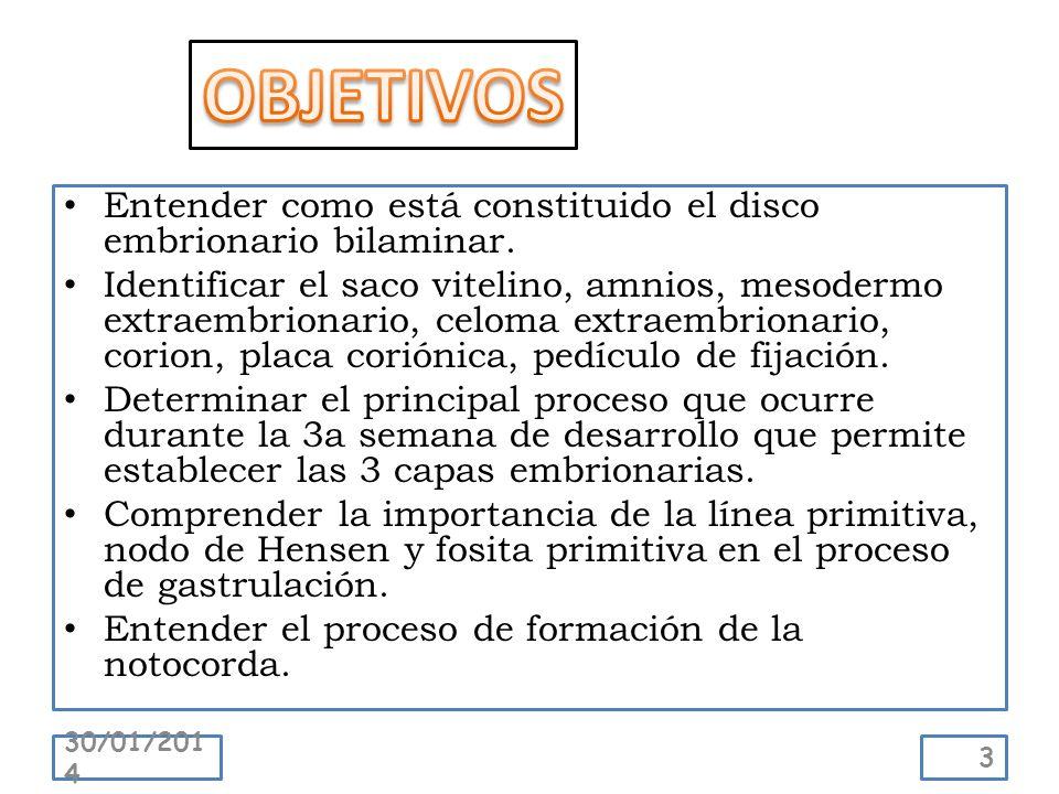 OBJETIVOS Entender como está constituido el disco embrionario bilaminar.