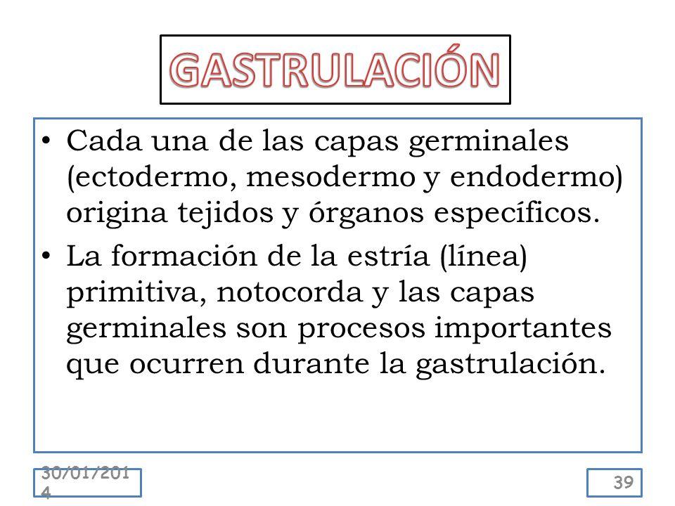 GASTRULACIÓN Cada una de las capas germinales (ectodermo, mesodermo y endodermo) origina tejidos y órganos específicos.