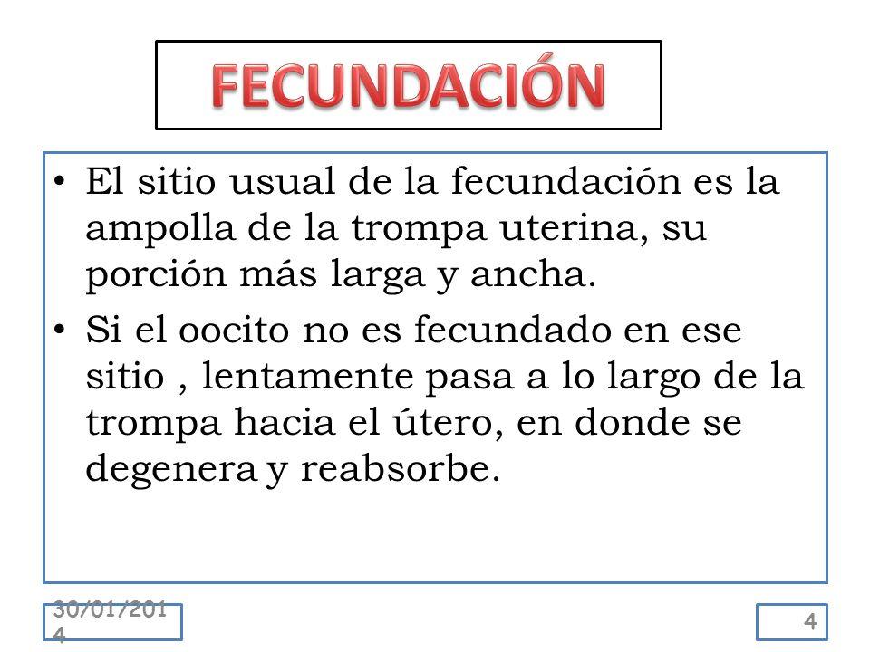 FECUNDACIÓN El sitio usual de la fecundación es la ampolla de la trompa uterina, su porción más larga y ancha.