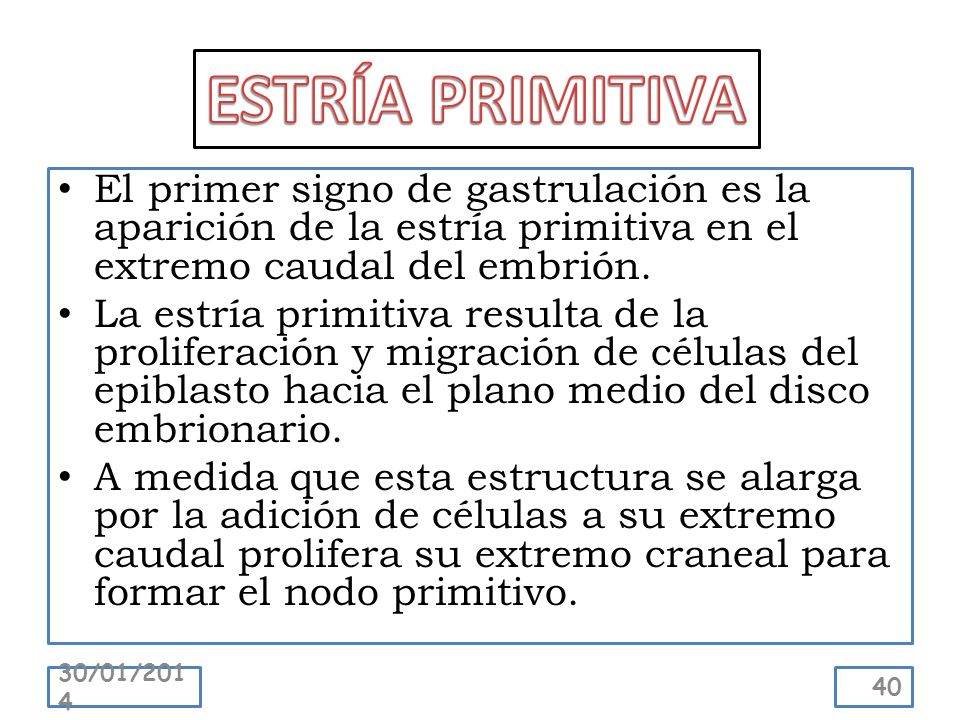 ESTRÍA PRIMITIVA El primer signo de gastrulación es la aparición de la estría primitiva en el extremo caudal del embrión.
