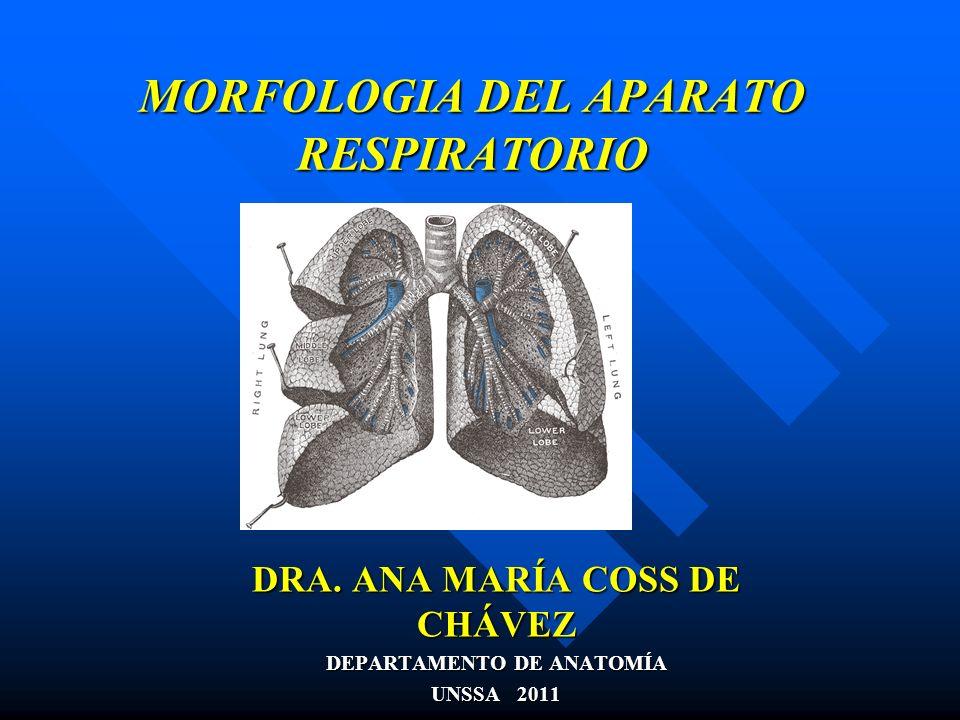 MORFOLOGIA DEL APARATO RESPIRATORIO