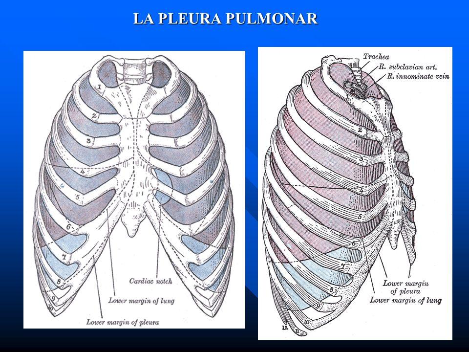 LA PLEURA PULMONAR