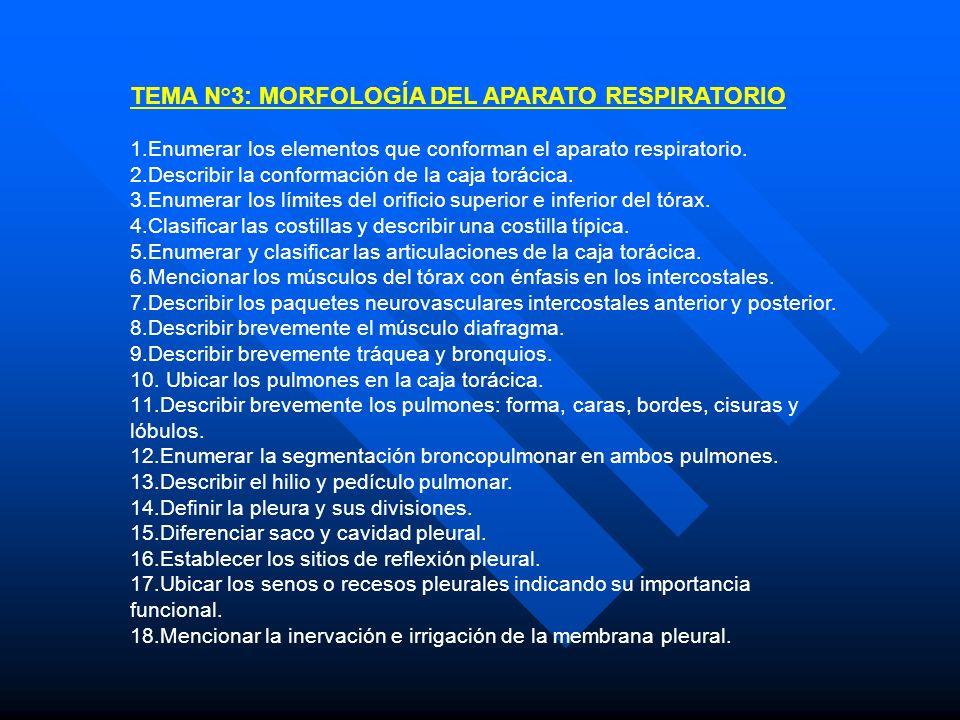 TEMA N°3: MORFOLOGÍA DEL APARATO RESPIRATORIO