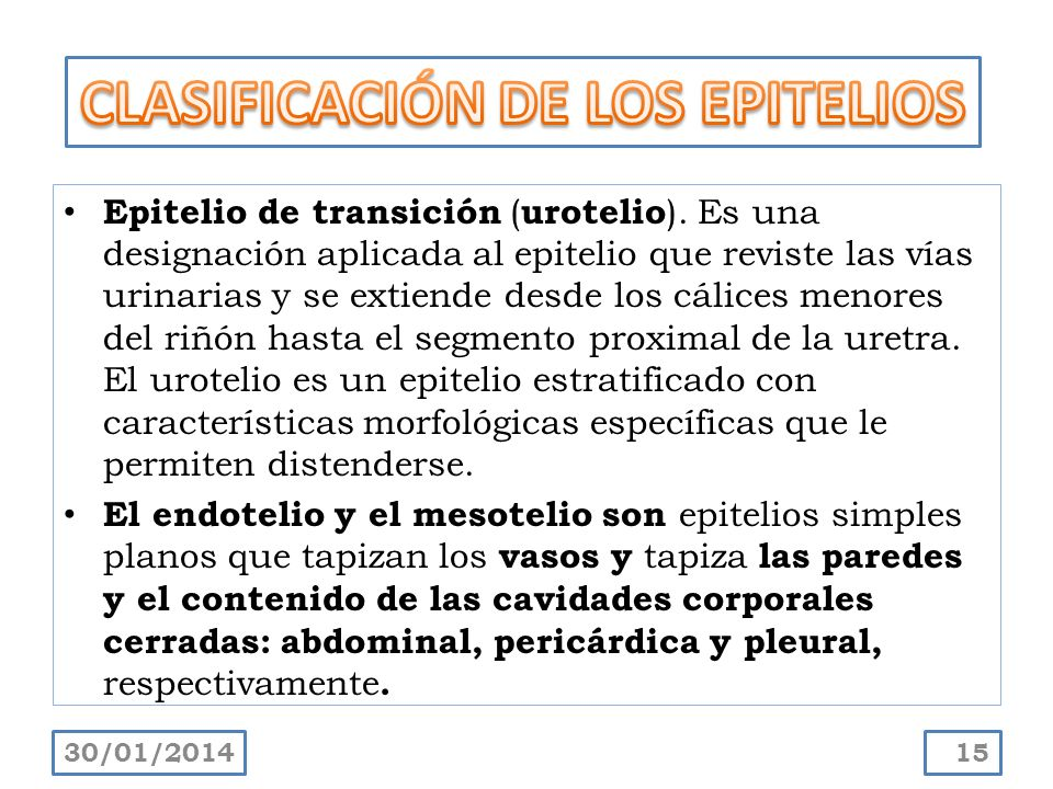 CLASIFICACIÓN DE LOS EPITELIOS