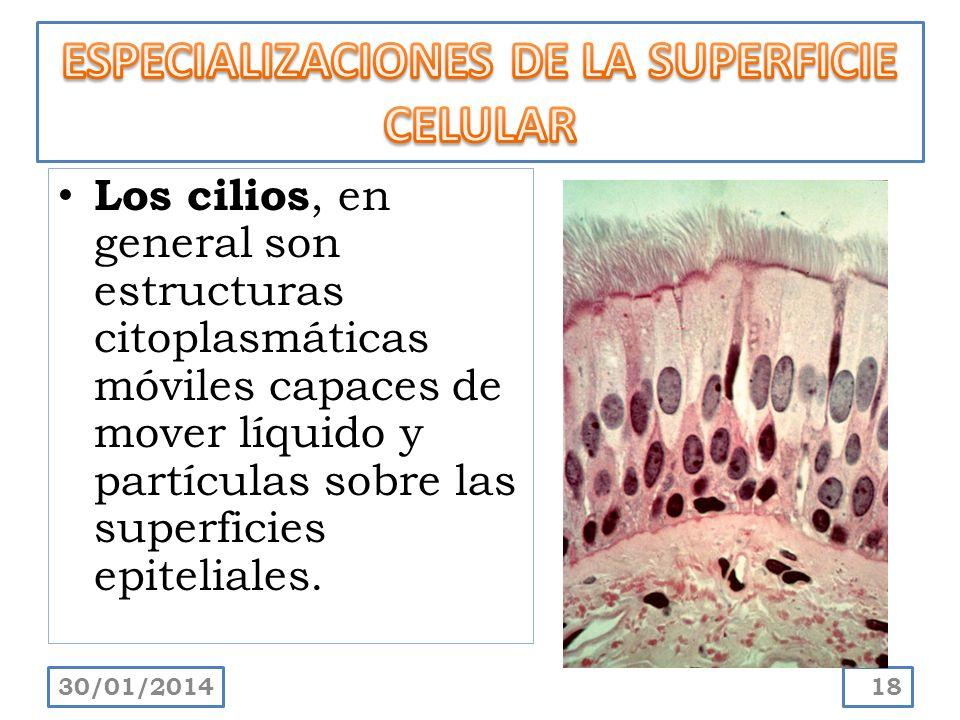 ESPECIALIZACIONES DE LA SUPERFICIE CELULAR