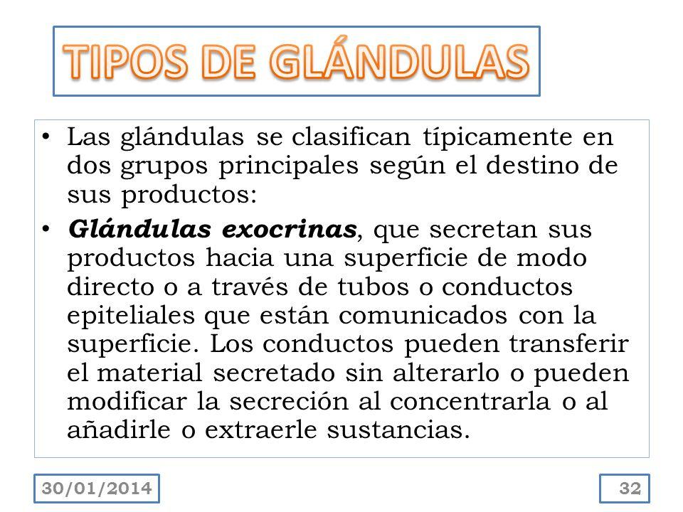 TIPOS DE GLÁNDULAS Las glándulas se clasifican típicamente en dos grupos principales según el destino de sus productos: