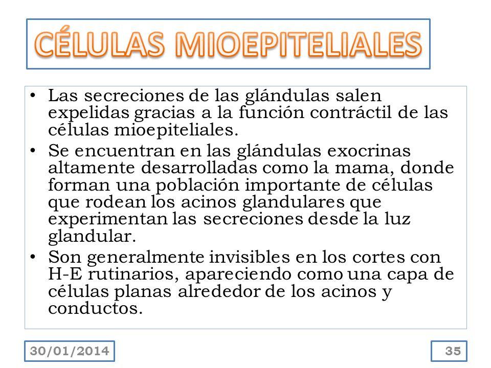 CÉLULAS MIOEPITELIALES