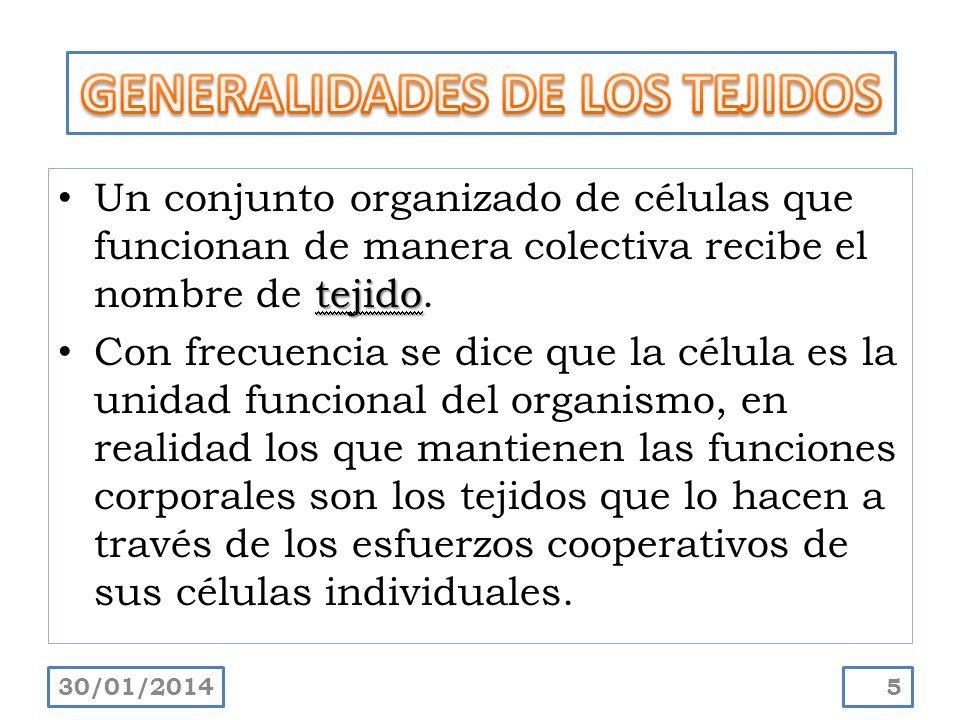 GENERALIDADES DE LOS TEJIDOS