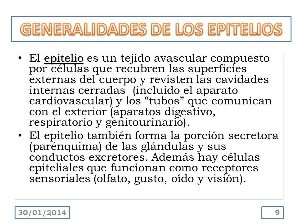 GENERALIDADES DE LOS EPITELIOS