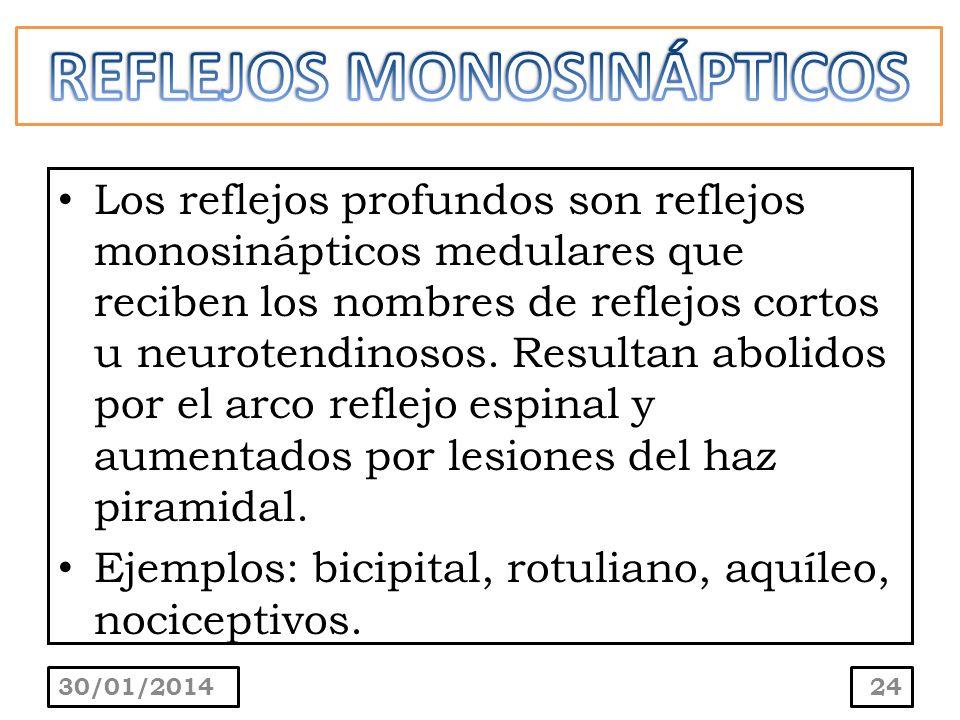 REFLEJOS MONOSINÁPTICOS