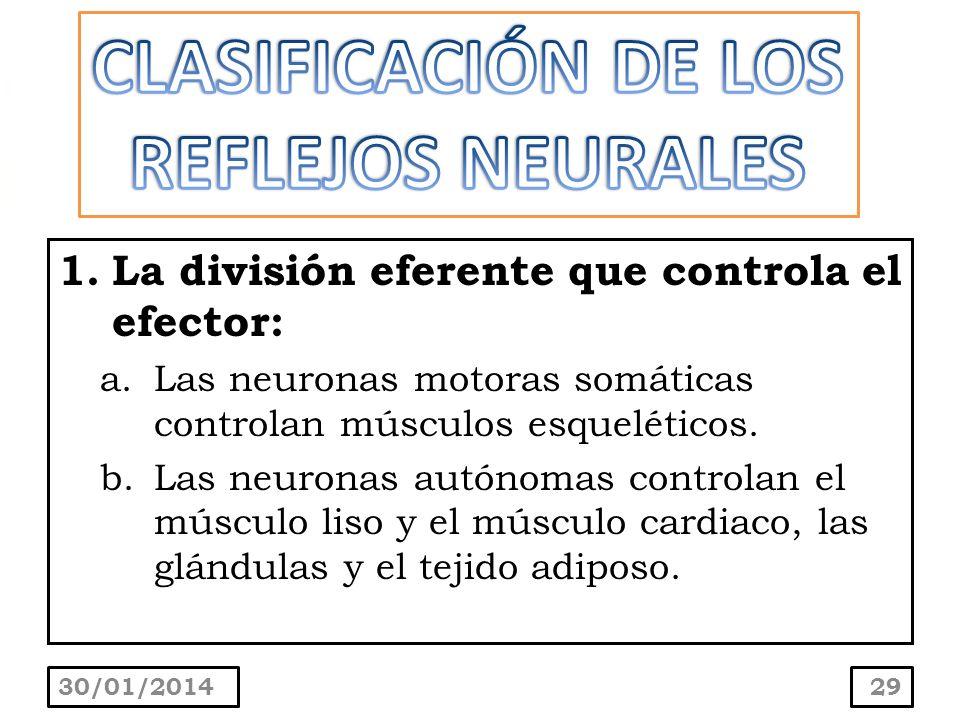CLASIFICACIÓN DE LOS REFLEJOS NEURALES