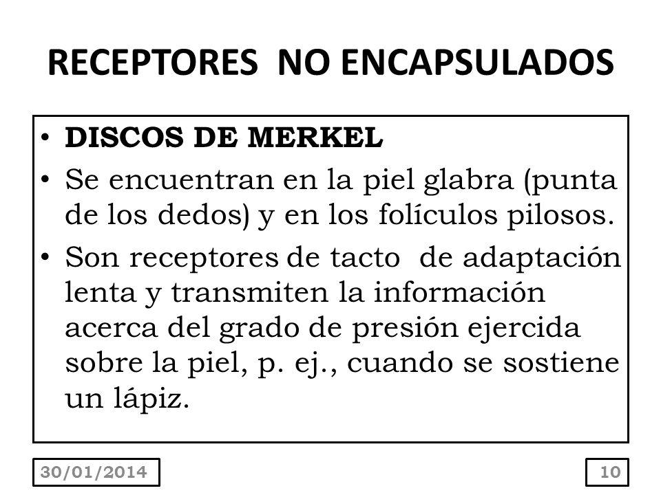RECEPTORES NO ENCAPSULADOS