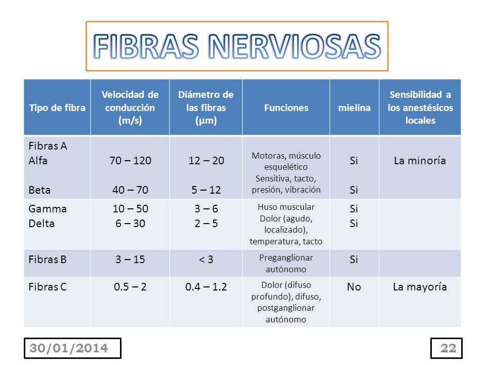 FIBRAS NERVIOSAS Fibras A Alfa Beta 70 – 120 40 – 70 12 – 20 5 – 12 Si