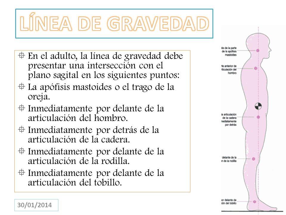 LÍNEA DE GRAVEDADEn el adulto, la línea de gravedad debe presentar una intersección con el plano sagital en los siguientes puntos: