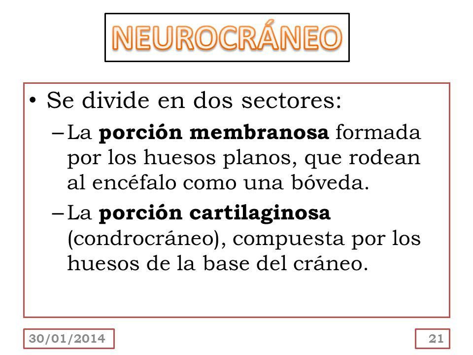 NEUROCRÁNEO Se divide en dos sectores: