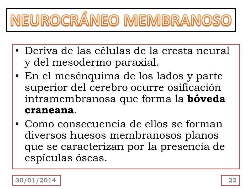 NEUROCRÁNEO MEMBRANOSO