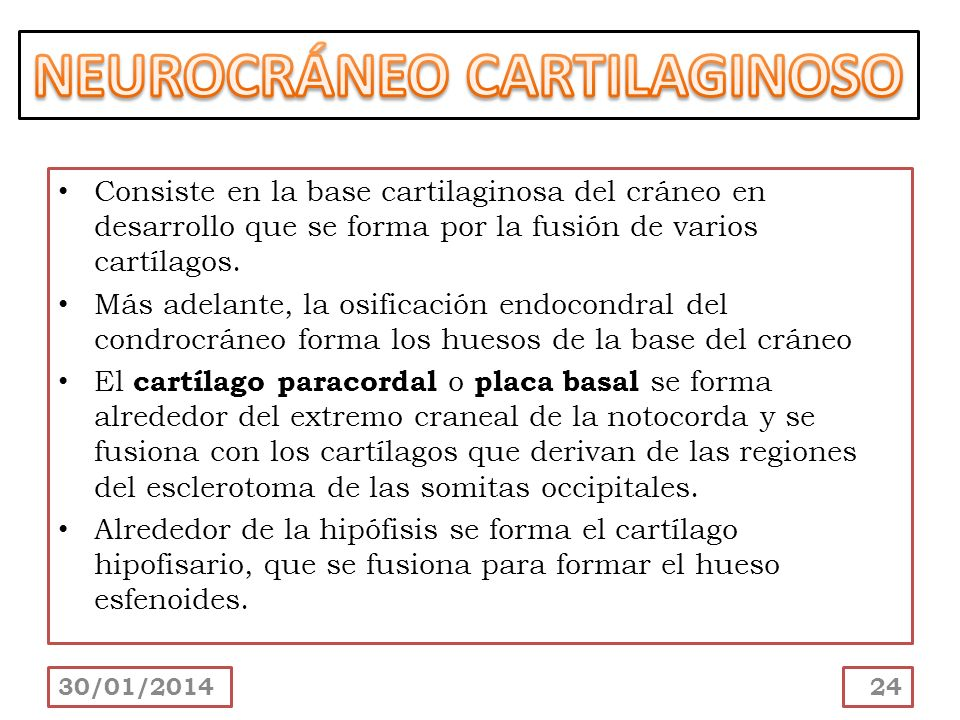 NEUROCRÁNEO CARTILAGINOSO