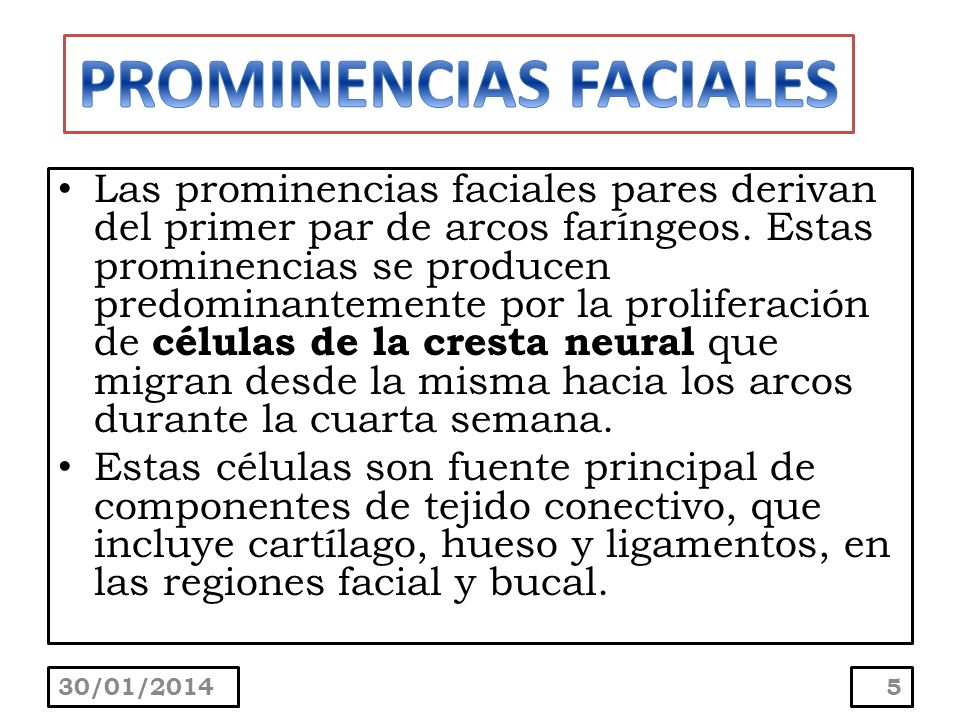 PROMINENCIAS FACIALES