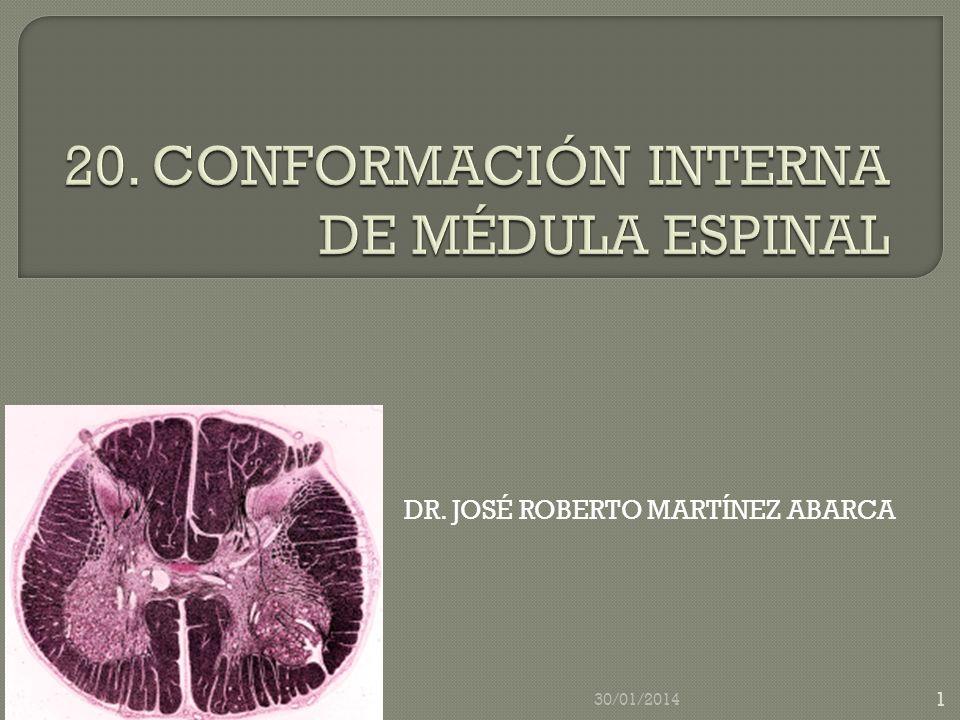 20. CONFORMACIÓN INTERNA DE MÉDULA ESPINAL
