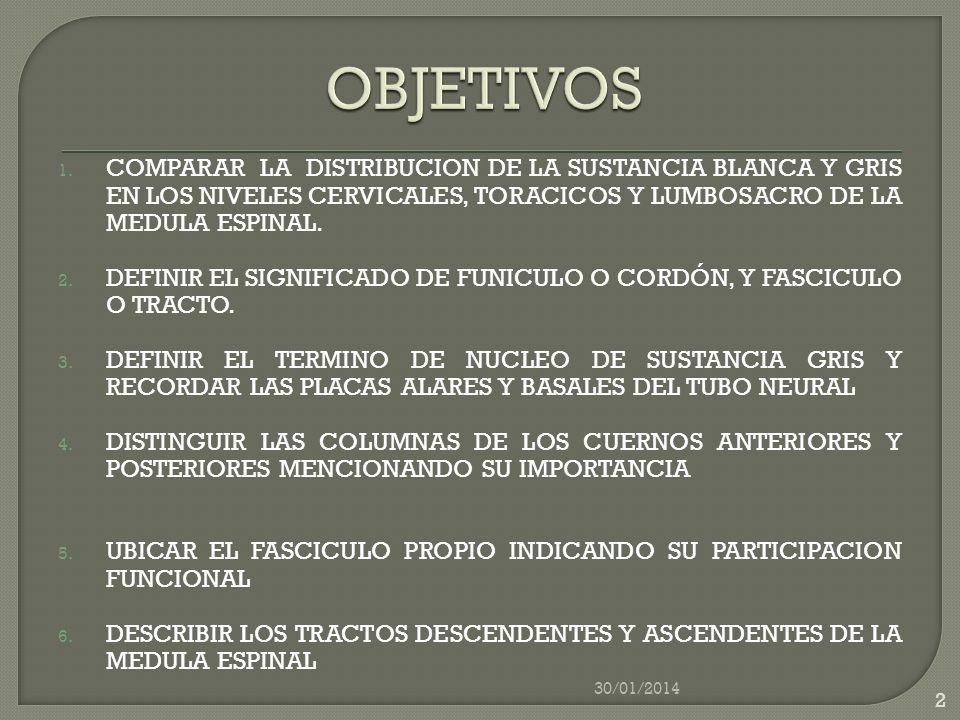 OBJETIVOS COMPARAR LA DISTRIBUCION DE LA SUSTANCIA BLANCA Y GRIS EN LOS NIVELES CERVICALES, TORACICOS Y LUMBOSACRO DE LA MEDULA ESPINAL.