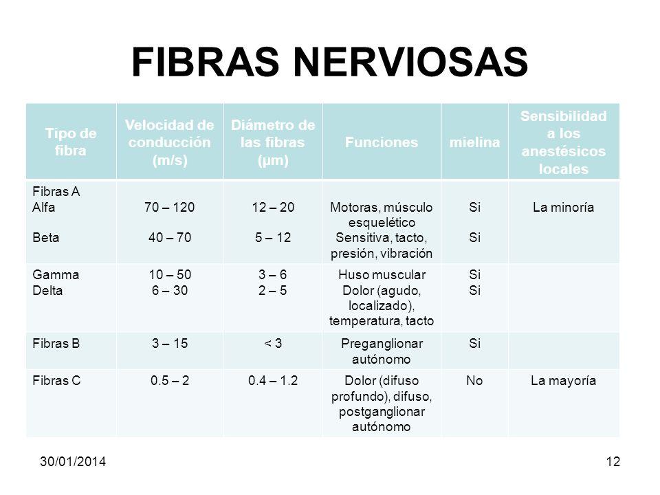 FIBRAS NERVIOSAS Tipo de fibra Velocidad de conducción (m/s)