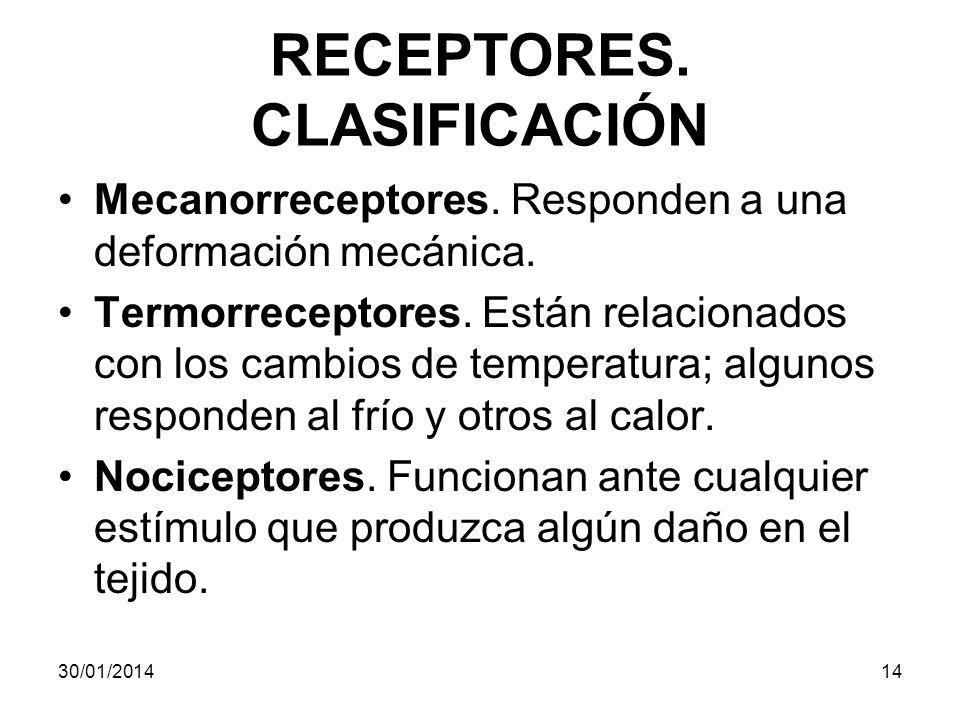 RECEPTORES. CLASIFICACIÓN
