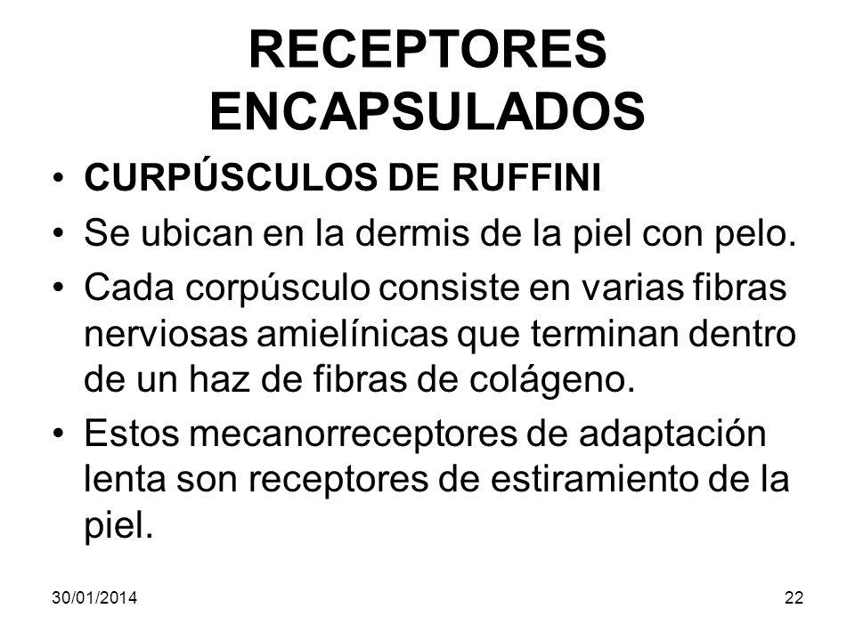 RECEPTORES ENCAPSULADOS