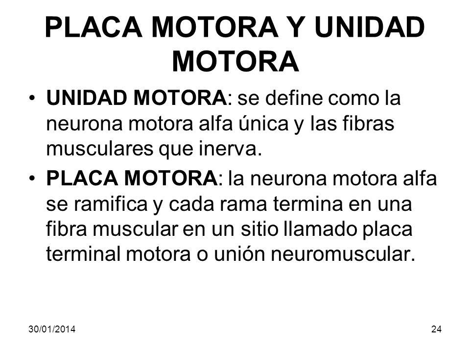 PLACA MOTORA Y UNIDAD MOTORA