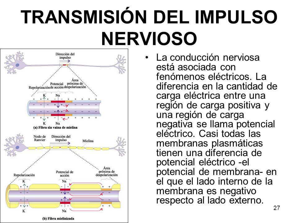 TRANSMISIÓN DEL IMPULSO NERVIOSO
