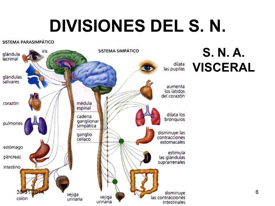 DIVISIONES DEL S. N. S. N. A. VISCERAL 24/03/2017