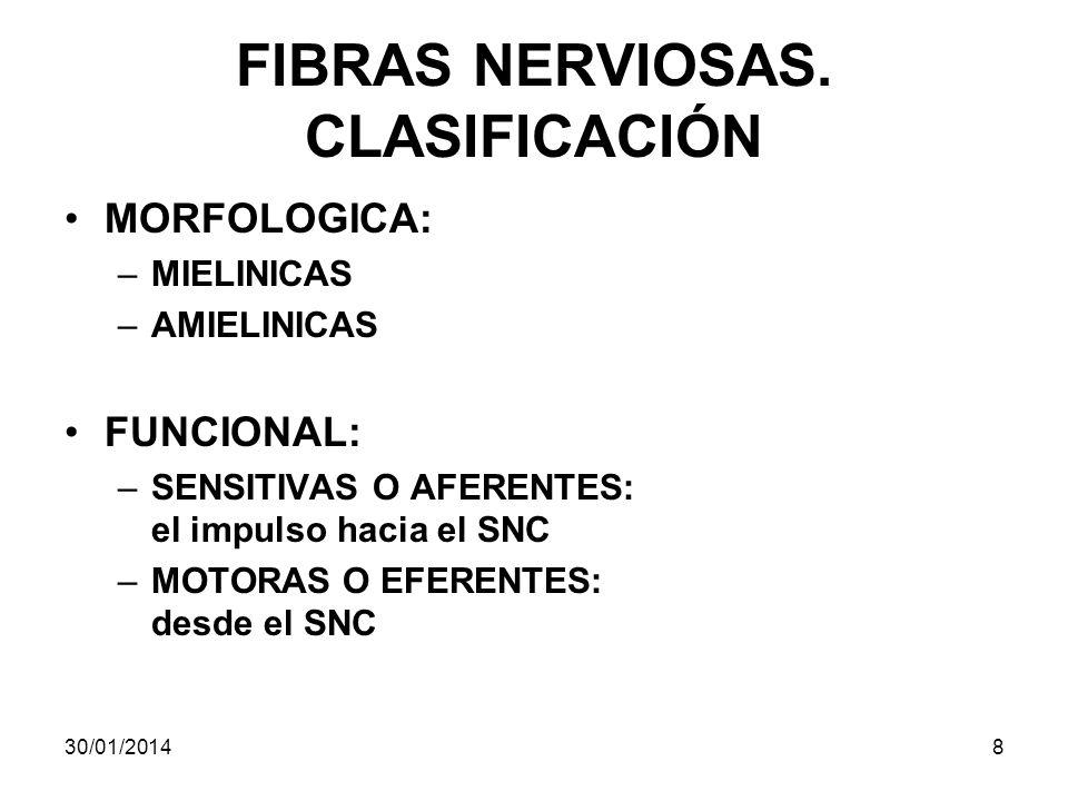 FIBRAS NERVIOSAS. CLASIFICACIÓN