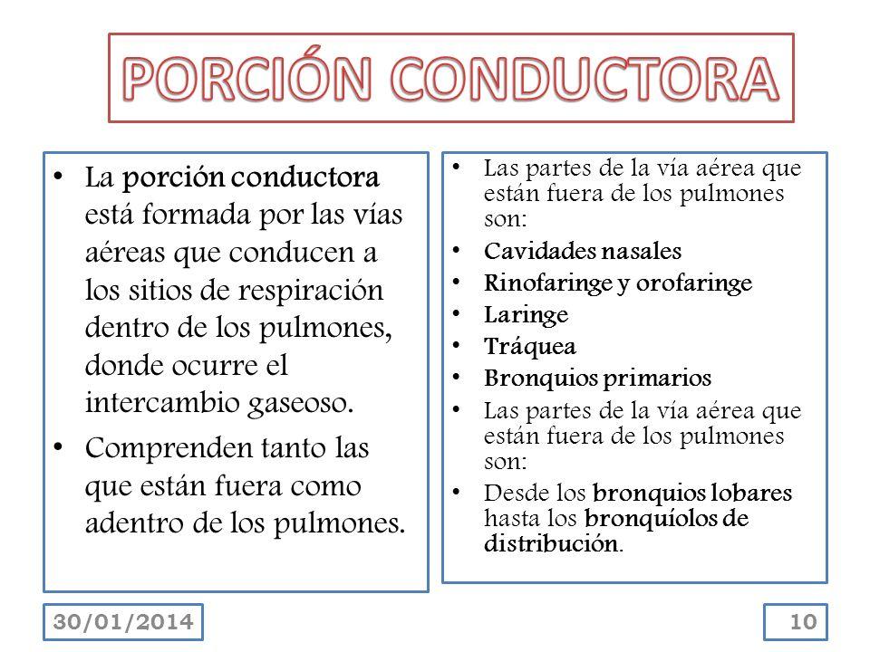 PORCIÓN CONDUCTORA
