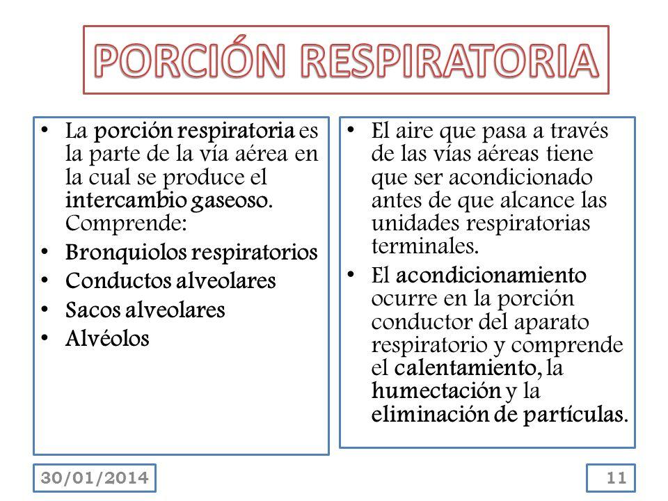 PORCIÓN RESPIRATORIA La porción respiratoria es la parte de la vía aérea en la cual se produce el intercambio gaseoso. Comprende: