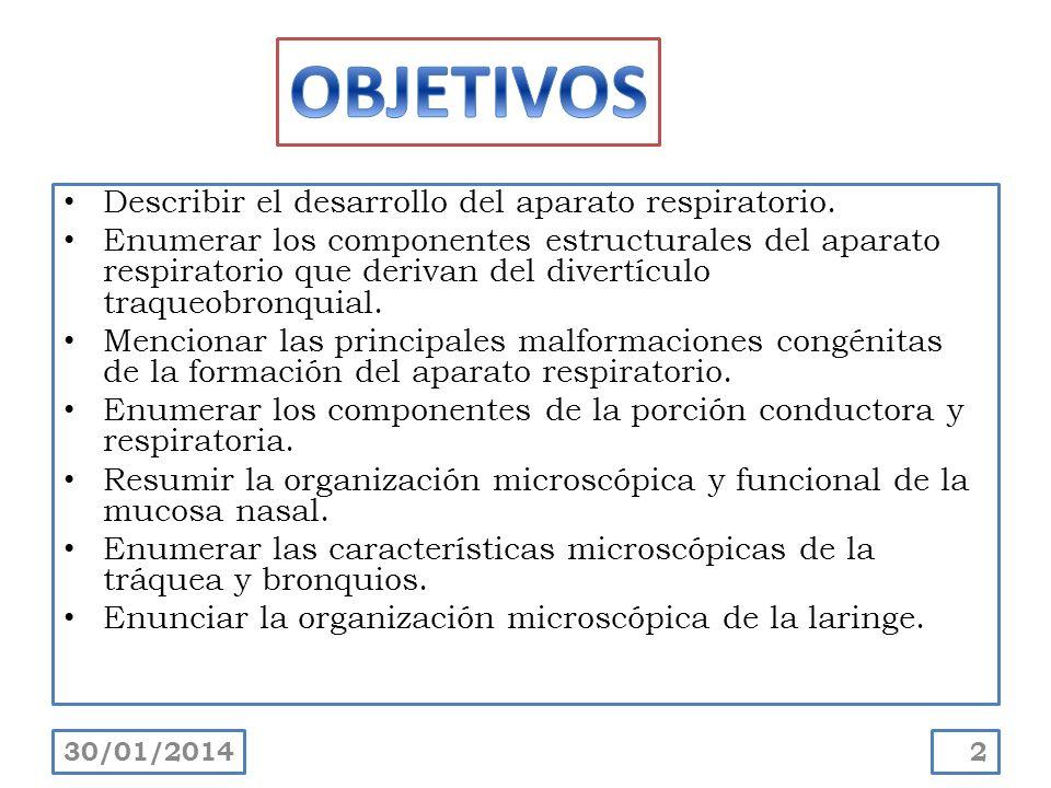 Excelente Anatomía E Histología Del Sistema Respiratorio Regalo ...