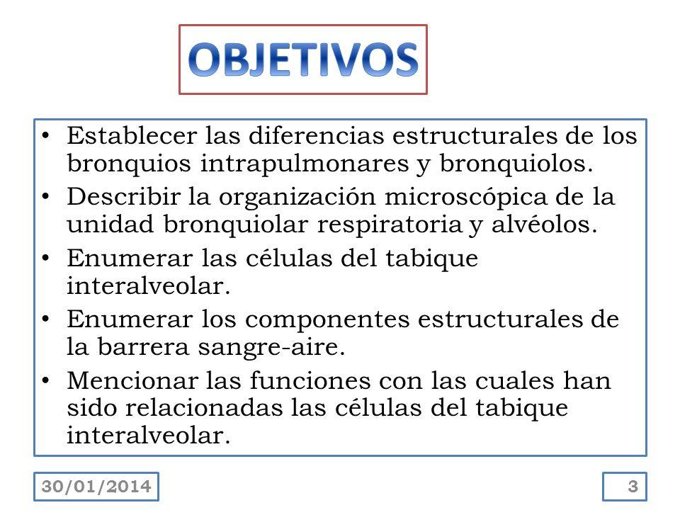 OBJETIVOS Establecer las diferencias estructurales de los bronquios intrapulmonares y bronquiolos.