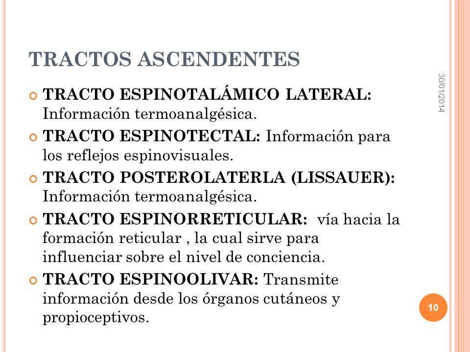 TRACTOS ASCENDENTES 24/03/2017. TRACTO ESPINOTALÁMICO LATERAL: Información termoanalgésica.