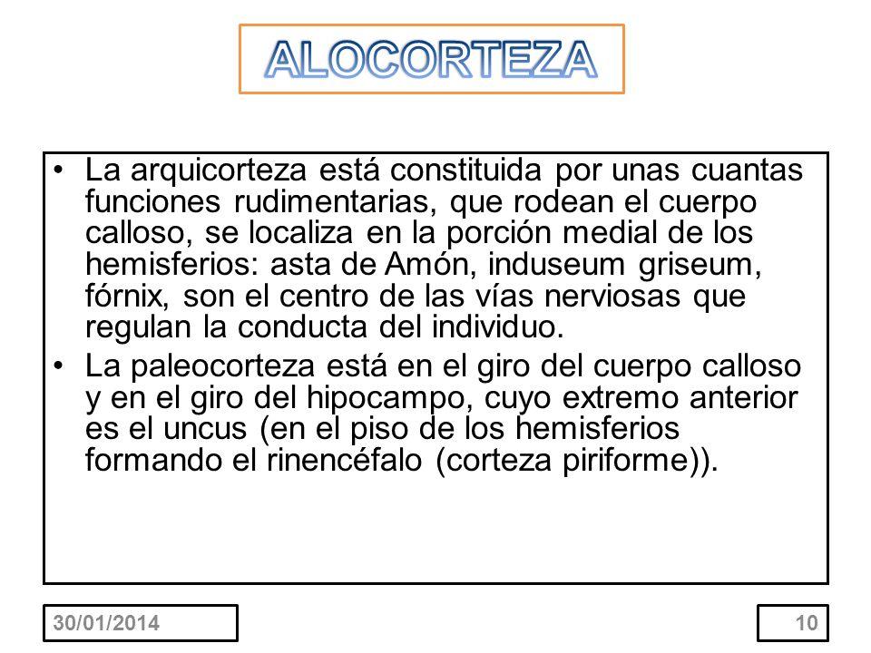 ALOCORTEZA