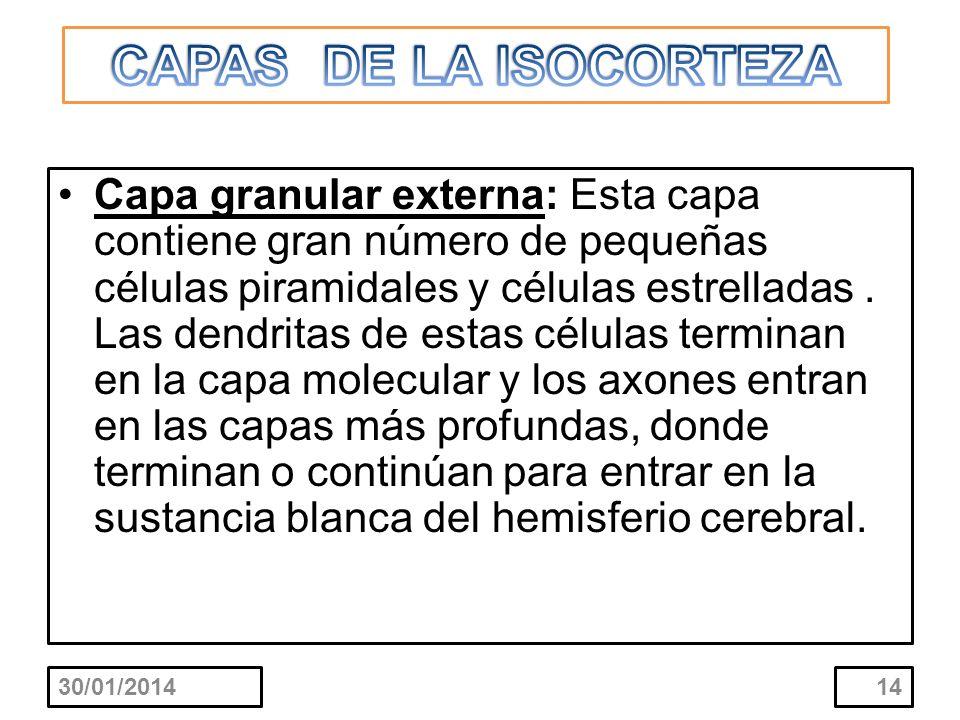 CAPAS DE LA ISOCORTEZA
