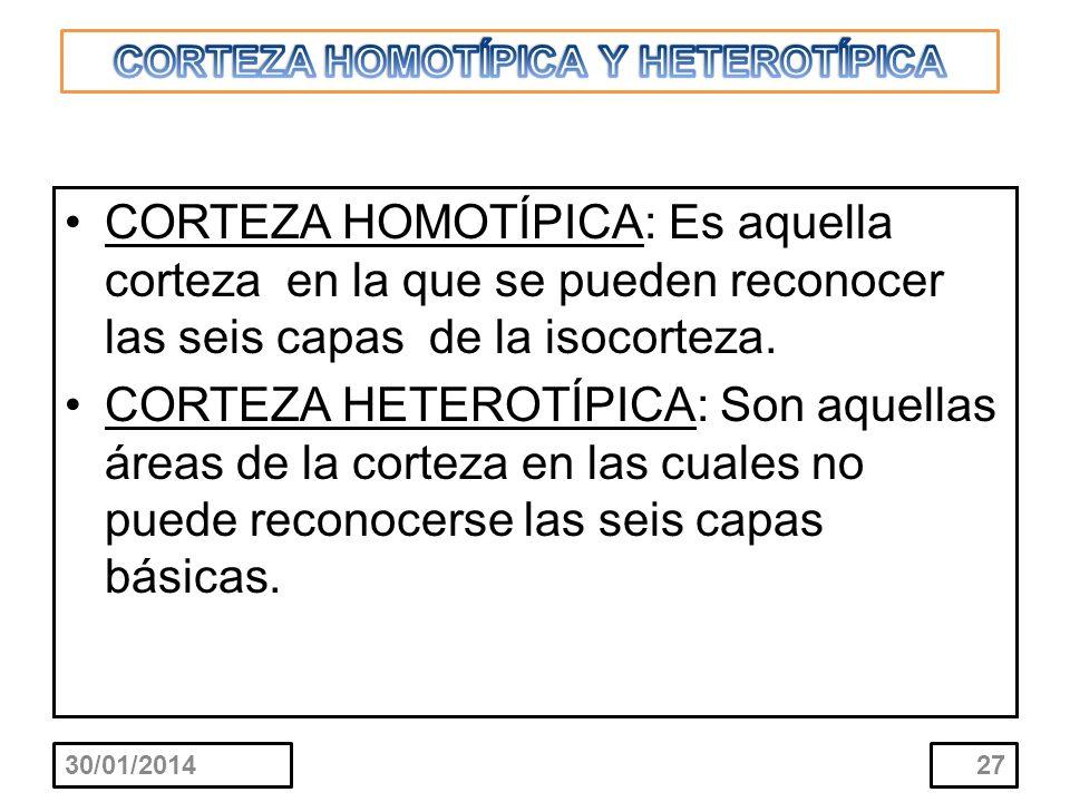 CORTEZA HOMOTÍPICA Y HETEROTÍPICA