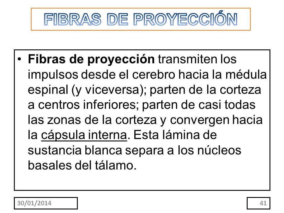 FIBRAS DE PROYECCIÓN